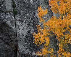 Granite Aspen