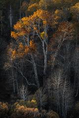 Autumn Allusion