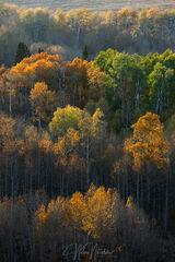 Color Harvest