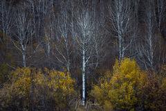 Fall Isolation