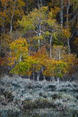Autumn Wonderers