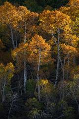 Autumn Illume