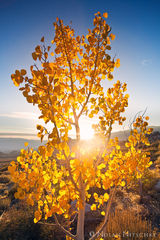 eastern sierra, california, owens valley, sun, sunrise, aspen