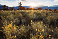 cottonwood, birch, color, bishop, owens valley, autumn, aspen, fall, eastern sierra, california
