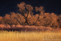 owens valley, vegetation, morning, light, eastern sierra, california