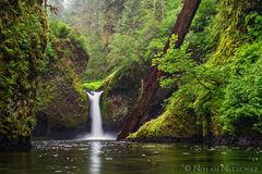 oregon, punch bowl falls, eagle creek, , columbia river gorge, lush, green