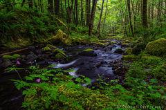 oregon, columbia river gorge, lush, green, creek, gorton, vegetation,
