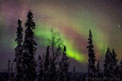 tree, brooks, range, artic, circle, aurora borealis, aurora, northern lights, alaska