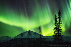 whale, tail, brooks, range, artic, circle, aurora borealis, aurora, northern lights, alaska