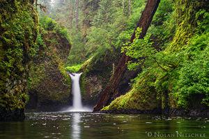 Oregon Outdoors