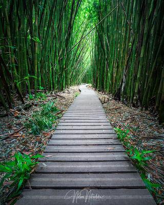 hawaii, bamboo, path, haleakala, national park, maui