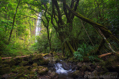 waimoku, falls, heleakala, national park, maui, hawaii