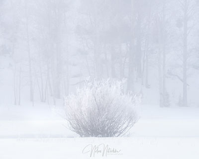 mammoth lakes, california, winter, freezing, fog, poconip, hoar, misty, morning