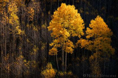 aspen, shadow, wilderness, snowmass, maroon bells, national forest, white river, light, golden, colorado