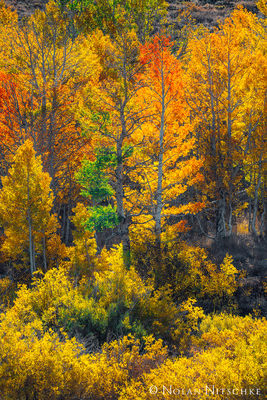 eastern sierra, sierra nevada, california, fall, colors, aspen, autumn,