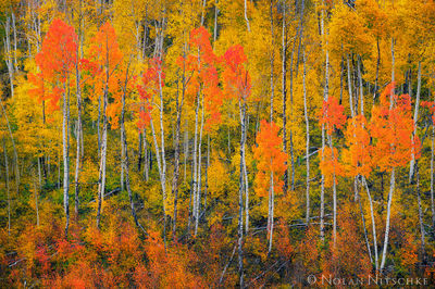 color, hues, autumn, uncompahgre national forest, colorado