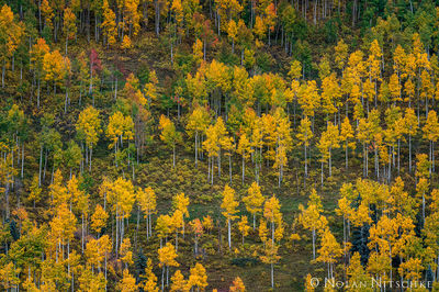 colorado, Uncompahgre National Forest