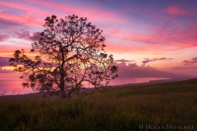 Maui Upland