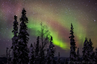 tree, brooks, range, artic, circle, aurora borealis, aurora, northern lights, alaska