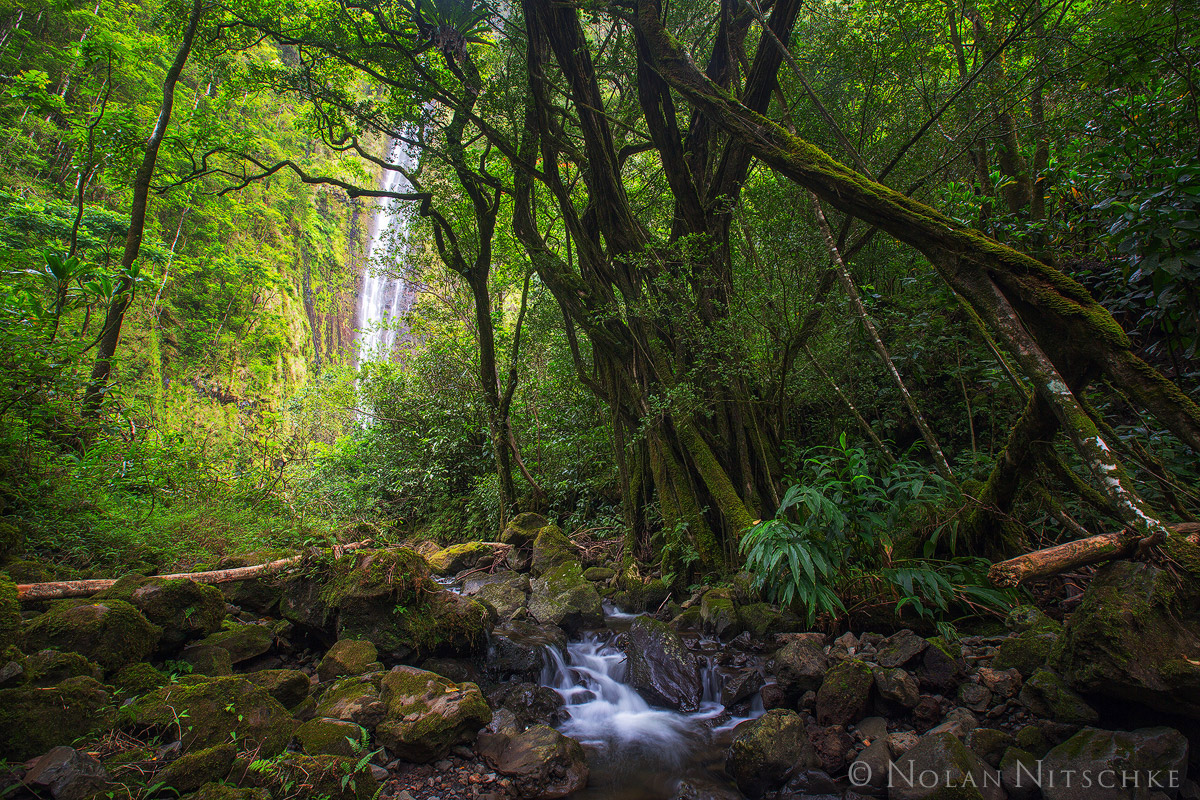 The 400 ft Waimoku Falls peaking through the lush jungle.