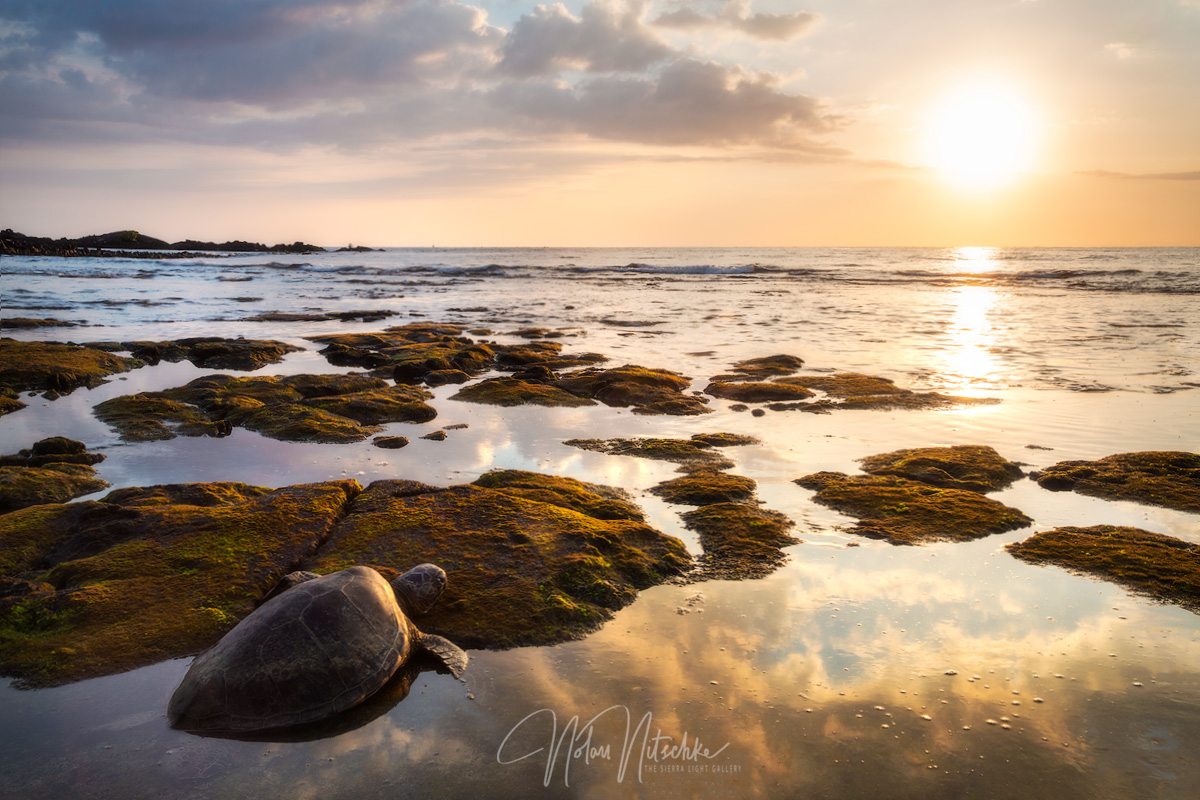 hawaii, big, island, green, sea, turtle, sea turtle, famous, sunset , photo