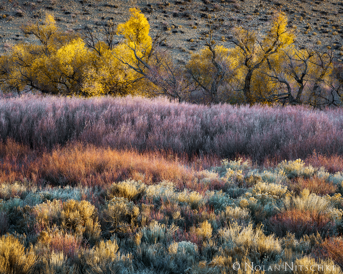 Fall colors of the Owens Valley.