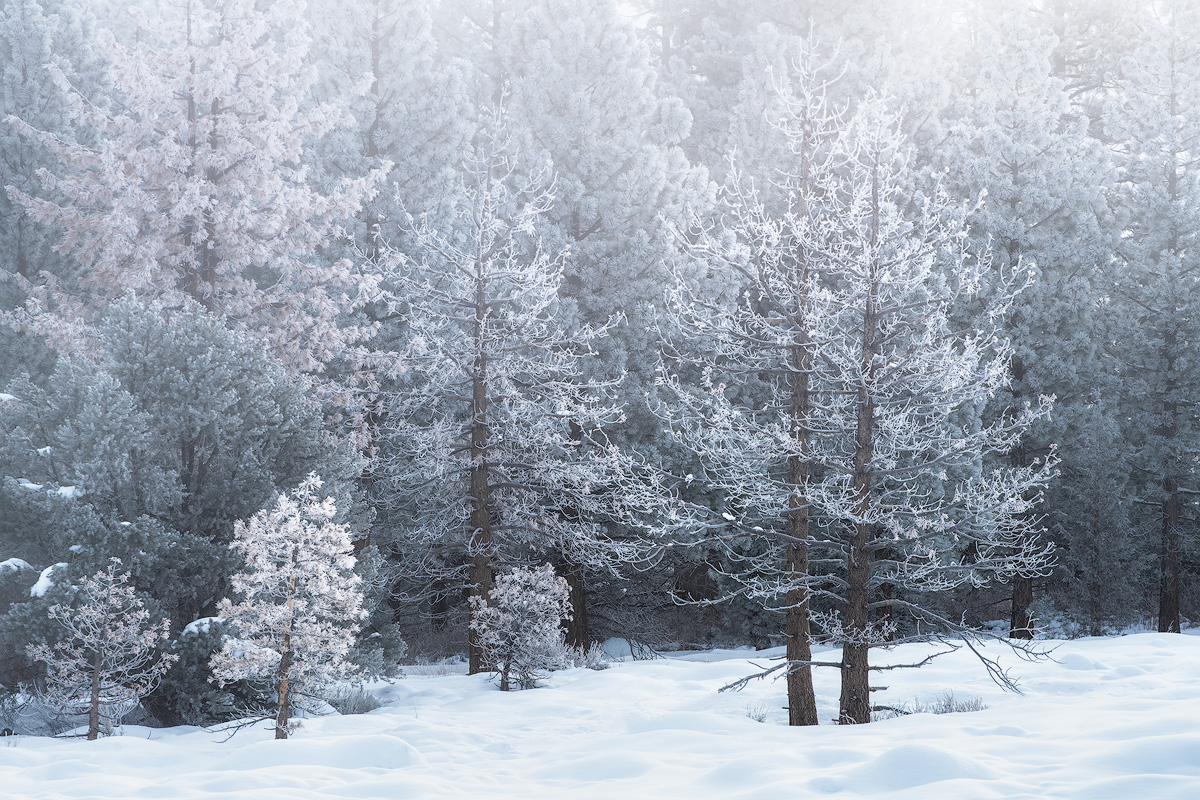 mammoth lakes, california, winter, poconip, hoar, frost, forest, ice, photo