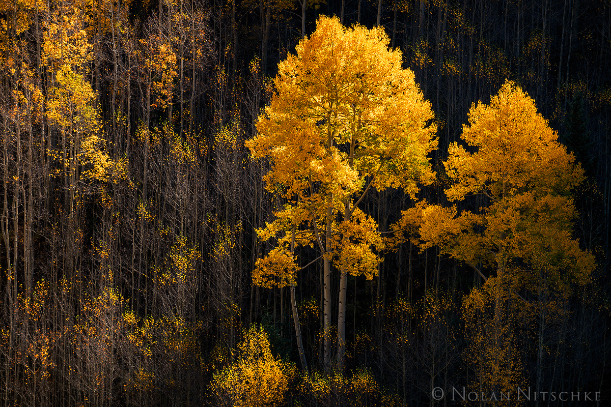 aspen, shadow, wilderness, snowmass, maroon bells, national forest, white river, light, golden, colorado, photo