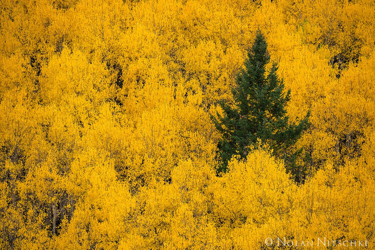 colorado, Uncompahgre National Forest, photo