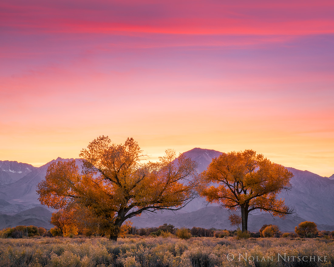 Halloween evening, the Witching Hour, during a beautiful sunset in the Owens Valley.