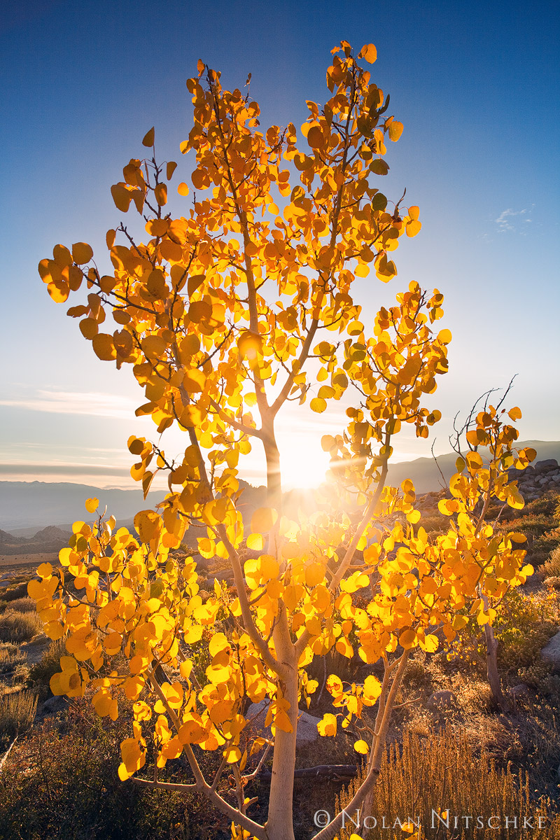 eastern sierra, california, owens valley, sun, sunrise, aspen, photo
