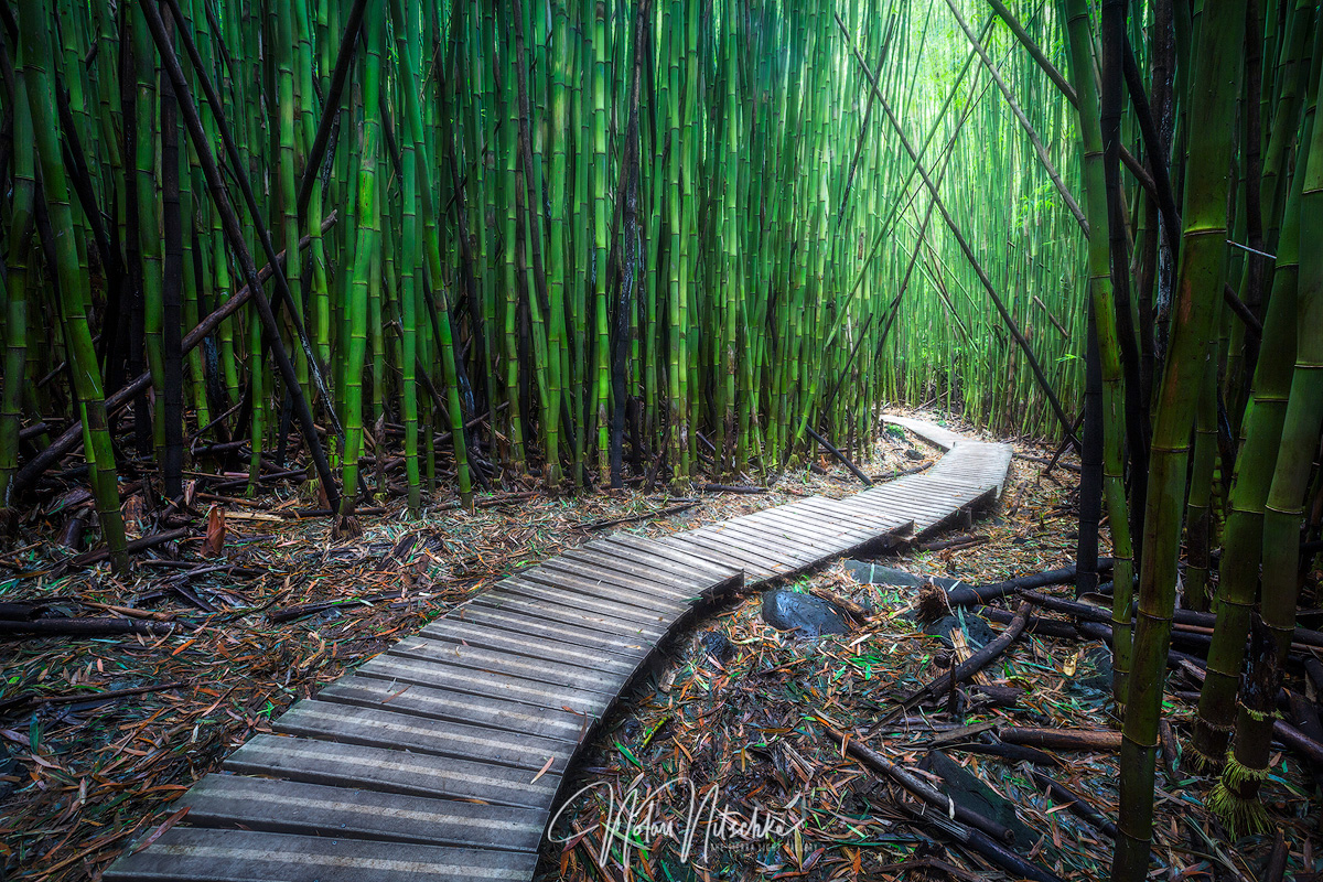 The Bamboo Path in Haleakala National Park.