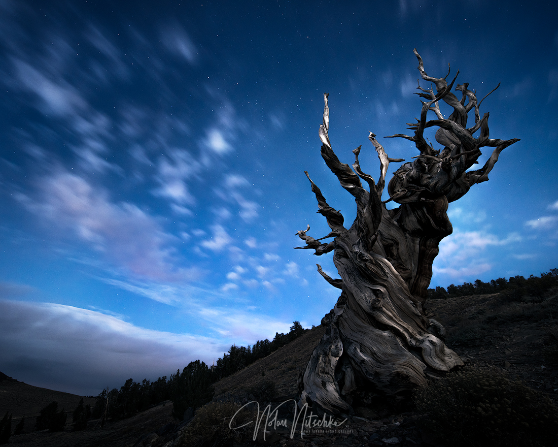 white mountains, inyo national forest, california, ancient, bristlecone, pine, moonlight, night, photo
