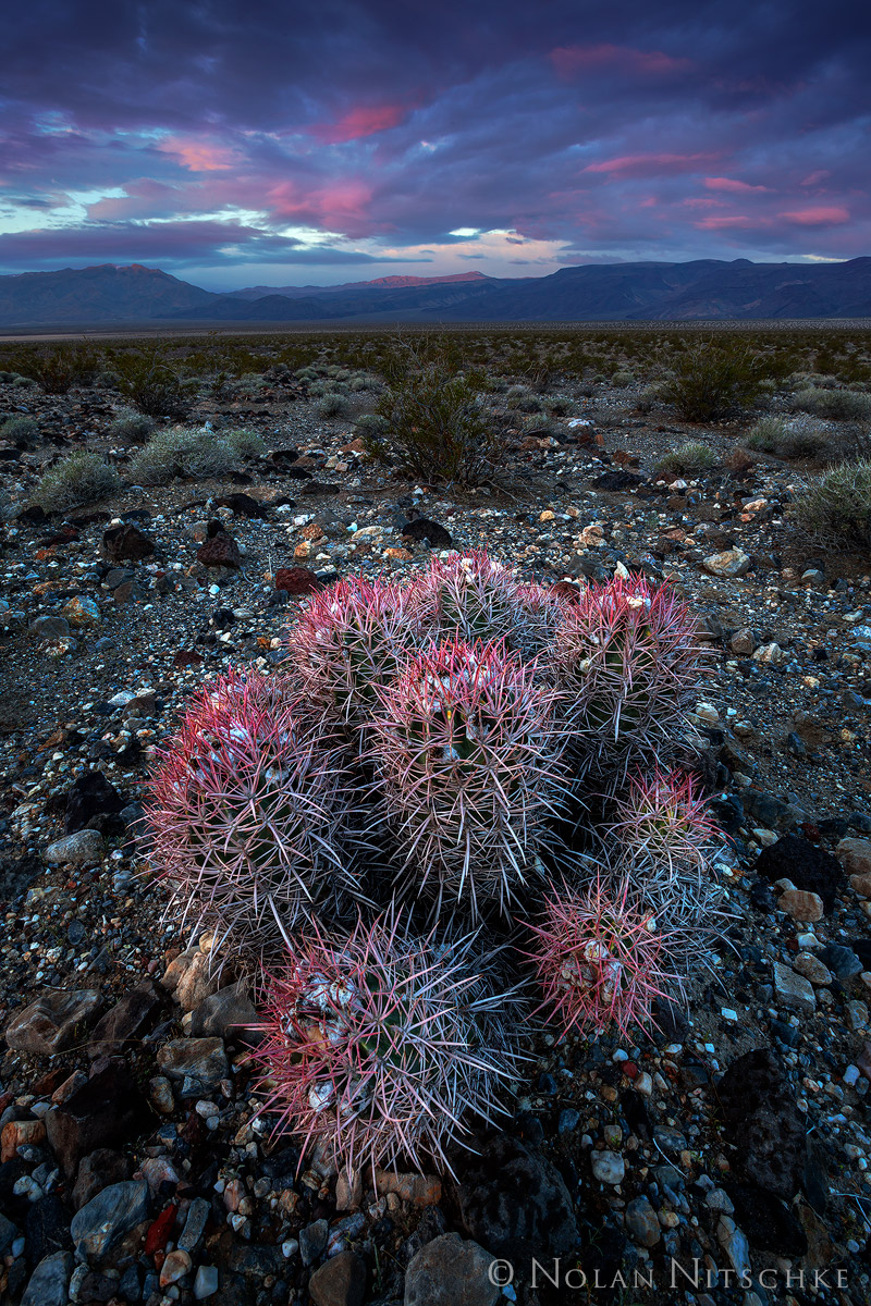 death, valley, death valley, national park, death valley national park, california, cacti, cactus, panamint, valley, sunrise, photo