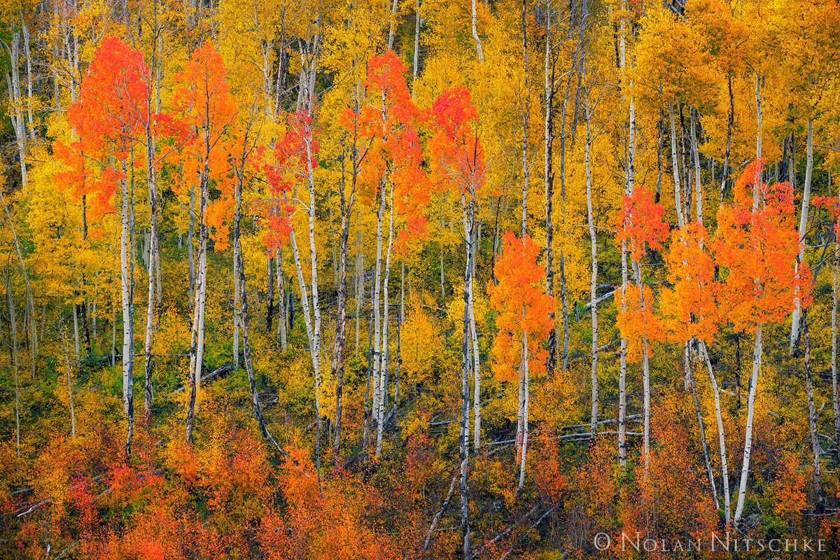 A vibrant display of the many hues that make up that wonder that is a Colorado Autumn.