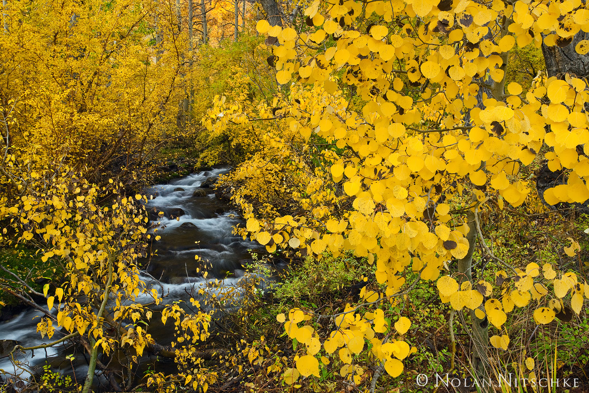 eastern sierra, california, mcgee creek, fall, color, photo