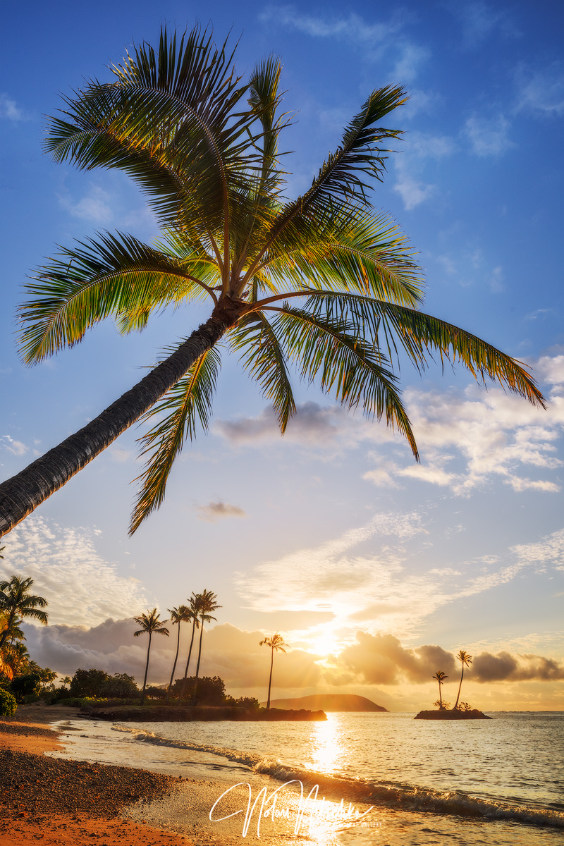 A palm tree and the start of another beautiful Hawaiian day.