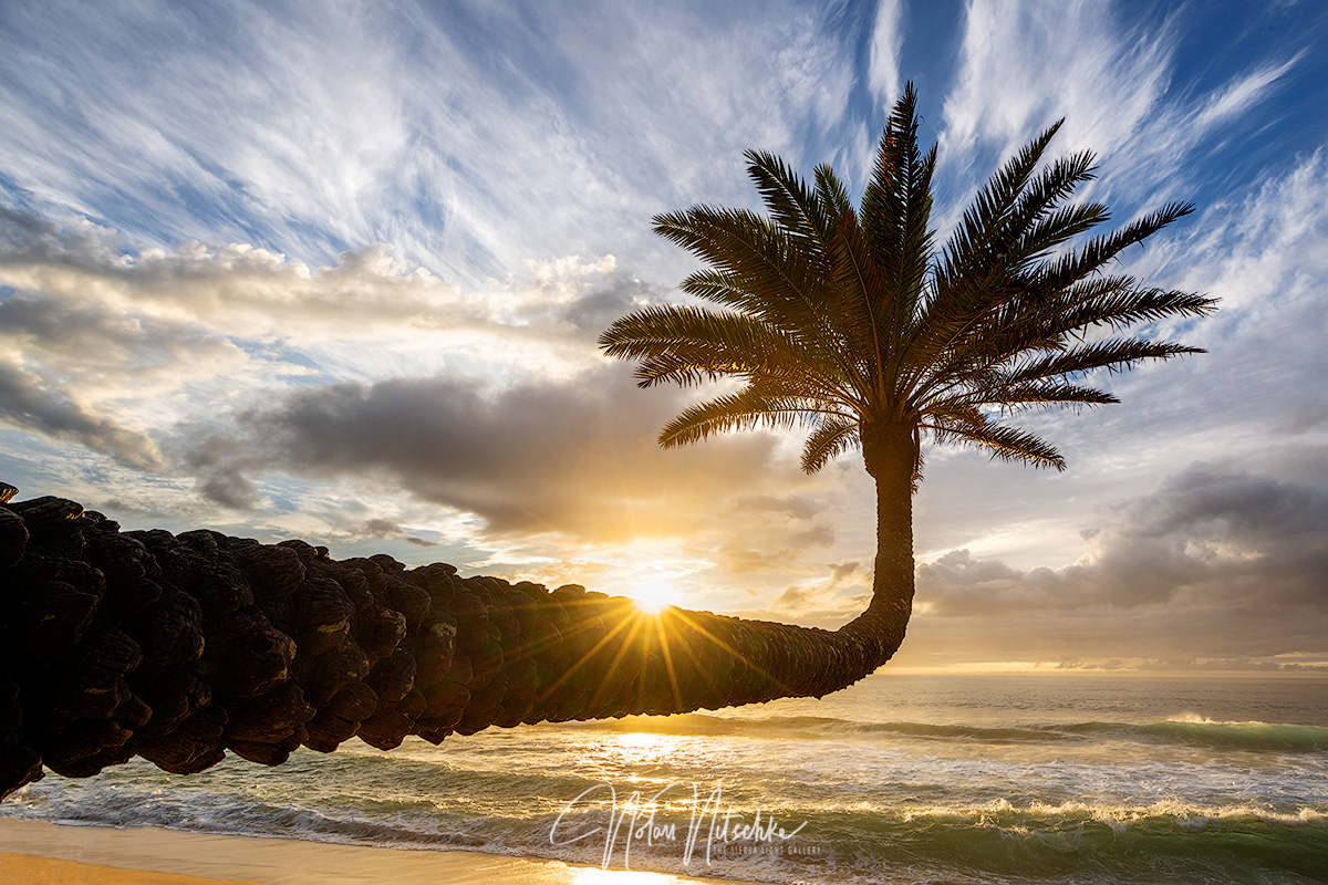 Palm trees reaching toward the ocean at sunset.