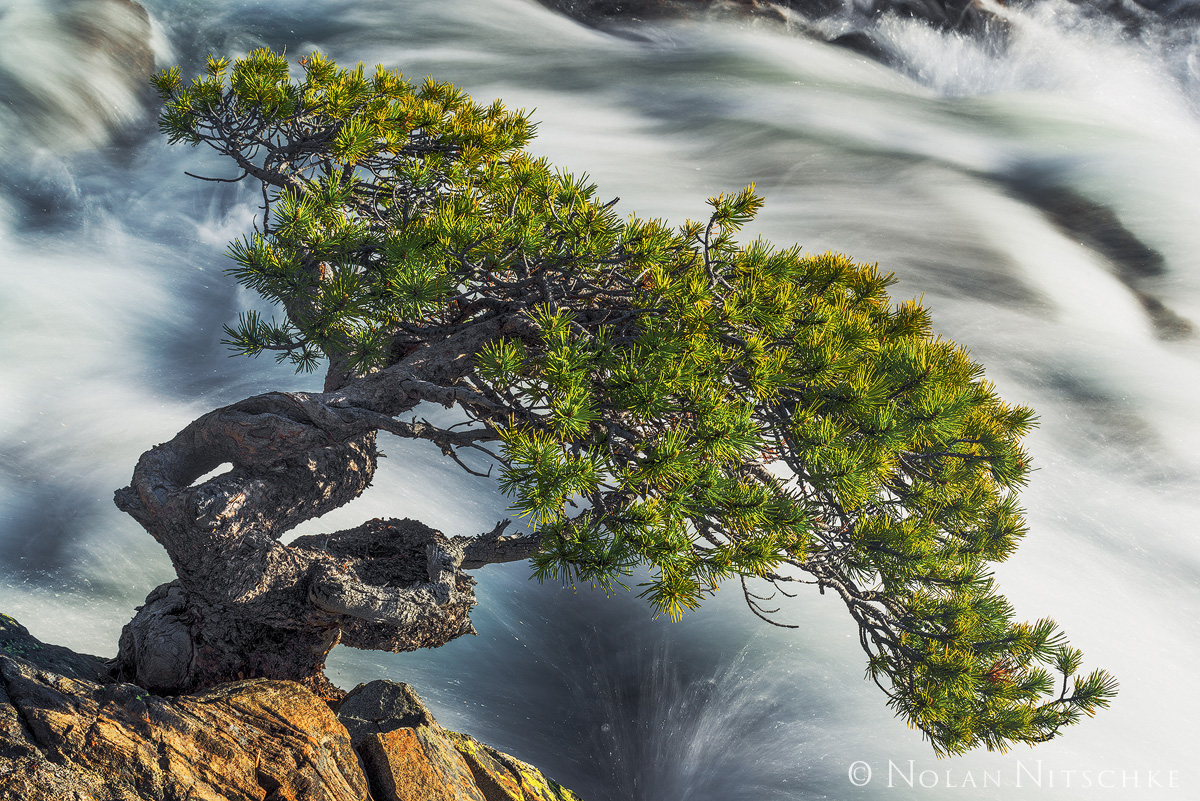 bonsai, lake, tahoe, south, california, creek, rushing, tree, photo