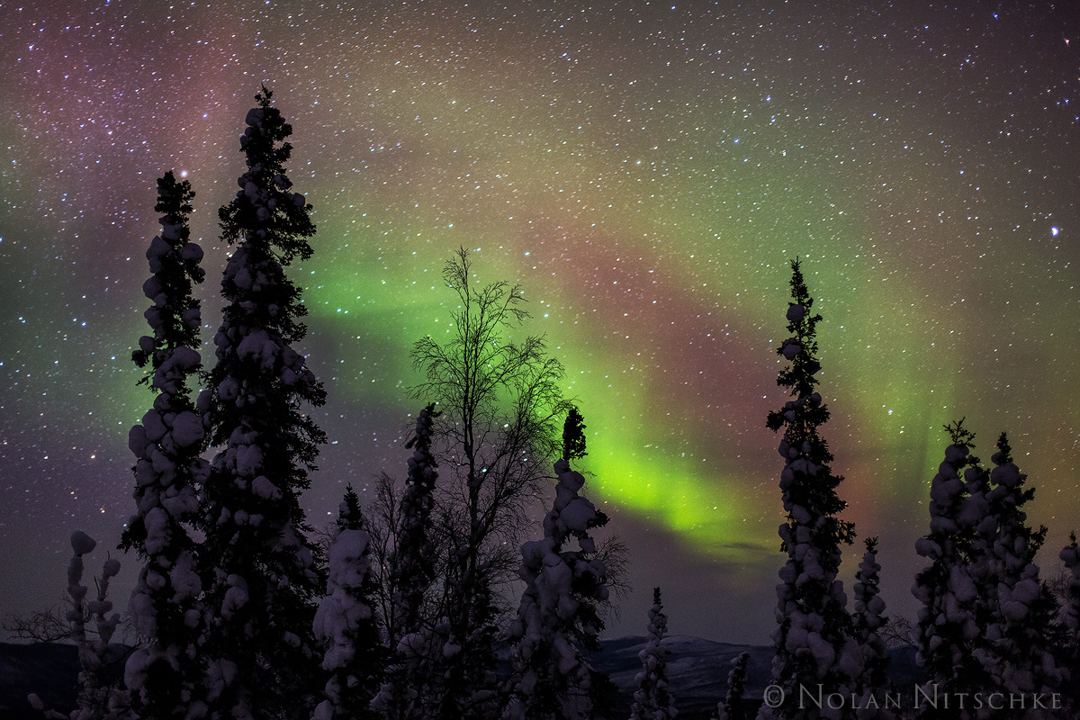 tree, brooks, range, artic, circle, aurora borealis, aurora, northern lights, alaska, photo