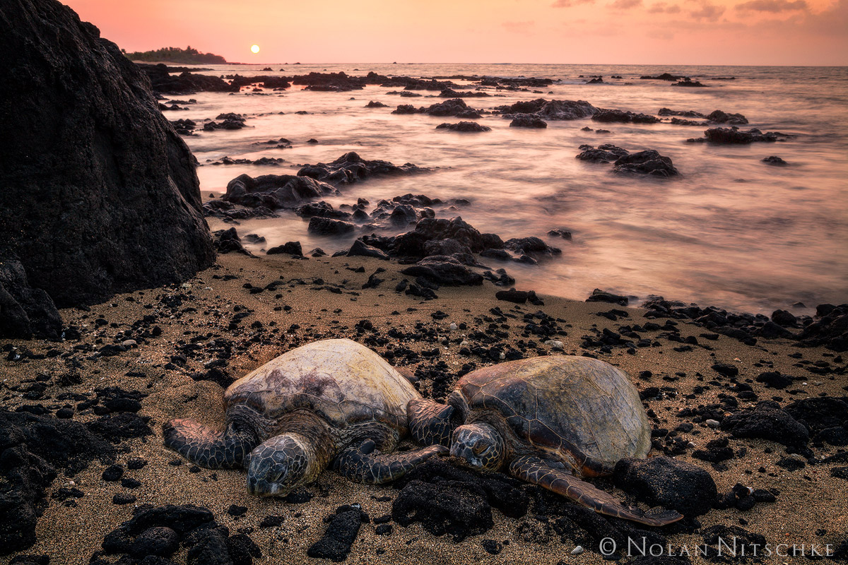 big island, hawaii, sea turtle, sunset, photo