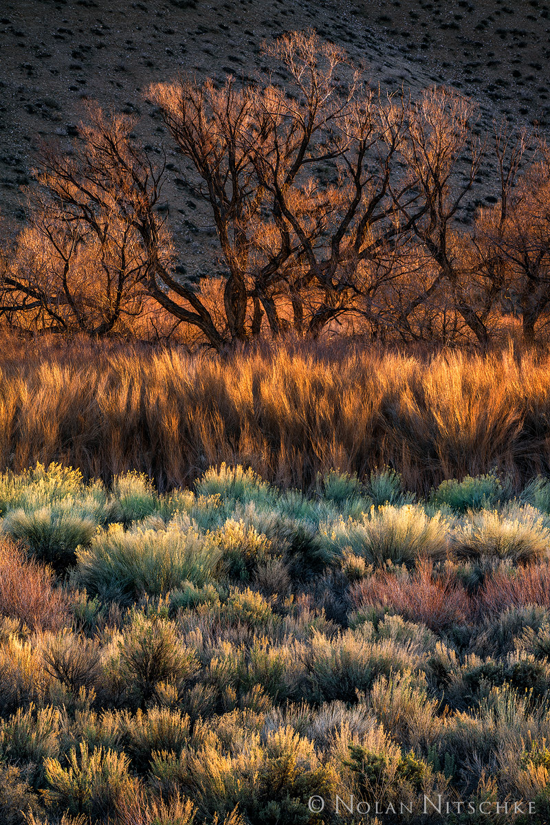 A mix of colors, texture, and vegetation and first light in the Owens Valley.