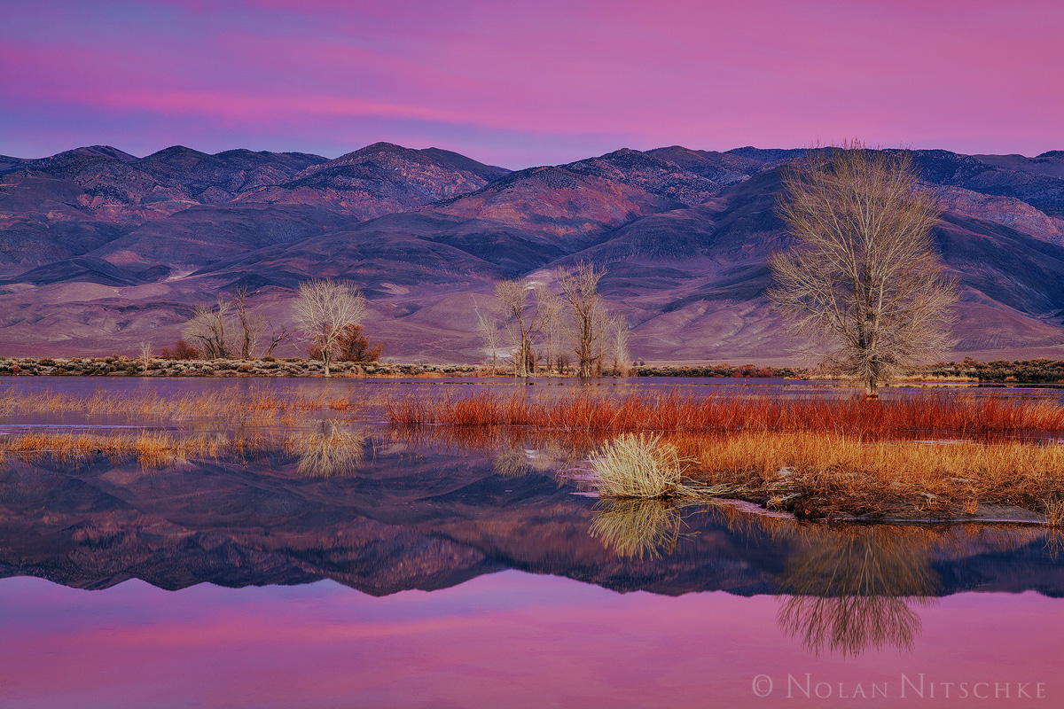 white mountains, reflection, reflecting, owens, valley, sunrise, eastern sierra, california, owens valley, photo